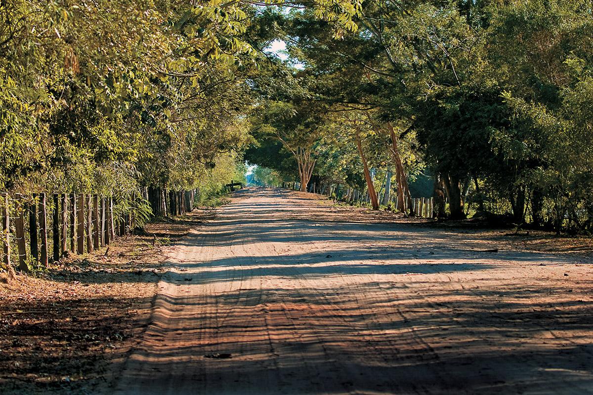 Estrada Parque do Pantanal
