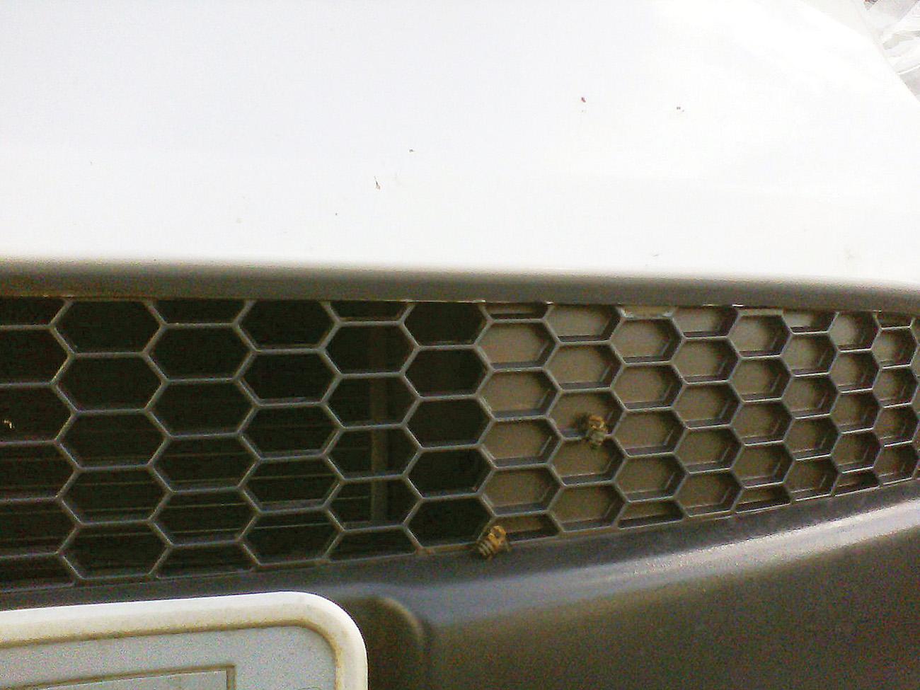 As grades em formato de colméia já estão começando a enganar as próprias abelhas!